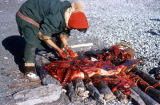 Little Diomede Eskimo skinning seal.
