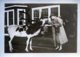 Reindeer in Alaska. Marie feeding it, 1927.