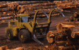 Log Sort Yard. Front-End Loader. Klawock, Alaska