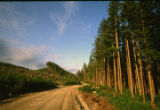 Clear-Cut. Road. Forest. Prince of Wales Island, Alaska. July