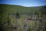 Abandoned gold mine, Ruby-Steele Creek.