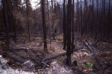 Kenai '91 burn N [north of] Skilak Lake-road.