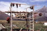 Caribou skins and meat on drying rack.