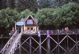 Halibut Cove, Saltery [sic].
