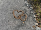 Moose poop in the shape of a heart.