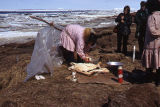 Cleaning oogruk. Chukchi Sea Shore.