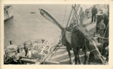 Transporting a horse onto a ship.