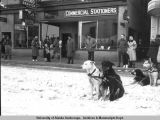 Fur Rendezvous, ca. 1940's. Dogs waiting.