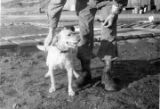 Soldier with dog.