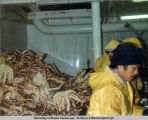 Aboard the Alindeska Sea Cold Bay Alaska processing crab.