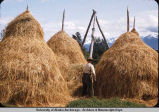 Haystacks at Jim Faulk farm, Homer.