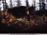 Herbert Middleton chopping wood on Middleton farm, Fritz Creek Road, Homer.