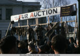 Fur Rondy, auction.