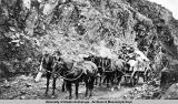Gov[ernmen]t team in gap on Thompsons [sic] Pass. Valdez-Fairbanks Trail [ca. 1910-1920].