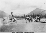 "Hubbard on horse ""Whitie"" fording the Copper River, ca. 1908 - 1909."