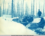 Valdez Trail camp: feeding hay to mules, 1898.