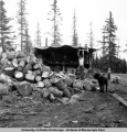Henry Middleton splitting firewood, Homer, summer 1952.