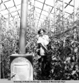 Roxalana Skobelska tends to tomato and bean plants in greenhouse on Pomeroy Farm, Kachemak Bay,...