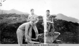"""Mill"" Plum holding wheelbarrow, Aleutians, Aug. 1944"