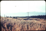 View of power pole near Homer, Alaska.