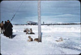 Group of men and dogs at Iliamna, Alaska.