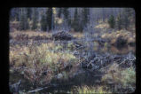 Beaver lodge, 4 ponds, 3 dams, Kenai, Chugach National Forest.