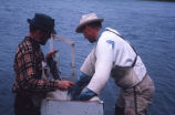 Two men measuring a salmon at King Salmon, Alaska, 1962.