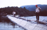 Men standing on a fish trap, King Salmon, Alaska, 1962.