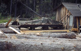 Sawmill at the Pomeroy homestead, Bear Cove.
