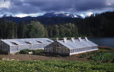Greenhouses at Bear Cove.