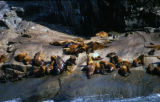 Sea lions drying.