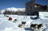 Dog mushers in McCarthy.