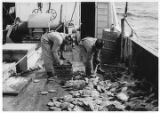 Misc. Comm. Fish (Scallop Fishery).
