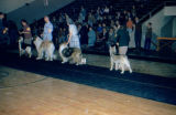 Dog show for Alaska Kennel Club in school gymnasium.