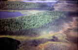 Aerial view of forest with ponds or lakes.