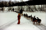 Two dog teams on trail with roadway visible above mushing trail.