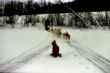 Dog team on trail with roadway visible above mushing trail.