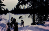 Joe Redington Sr.'s dog team on the Iditarod Trail.