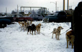 Dog team ready to depart on Park Strip sled dog race.