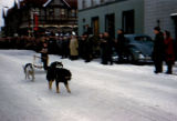 Junior sprint mushing race on Fourth Avenue in Anchorage.