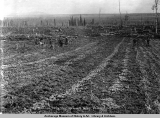 Potato field, Manley Hotsprings [sic], Tanana Valley, Alaska.