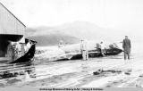 Whale being cut up, Akutan, Alaska.