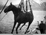 Hoisting a kicker from S.S. Dora in Portage Bay, Alaska.