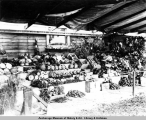 Matanuska vegetables at the first annual Alaska Agriculture Fair, 1917.