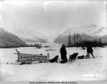 Alaska Yukon Exposition dog team.