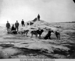 Dog teams on Bering Sea, Nome, Alaska, May 20th, 1906.