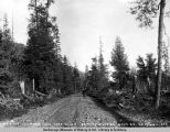 Wagon road near mile 4, Seward Division Gov[ernmen]t R[ail]r[oad], Oct. 19, 1918.