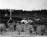 Berry bushes set out, spring of 1917, G.H. Saindon's ranch.