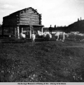 Goats at Copper Center, 1905.