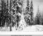 Winter scene on the Tanana Mines R[ail]r[oad], Fairbanks, Alaska.